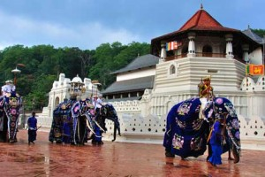 Miraculous Sri Lanka Tour Package