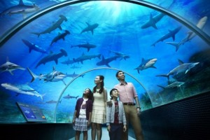 Best of Singapore Tour Package