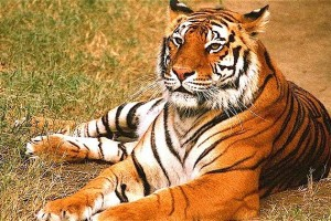 Wildlife Tour of India Tour Package