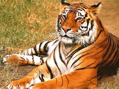 Wildlife Tour Of India Package By Indian Holidays