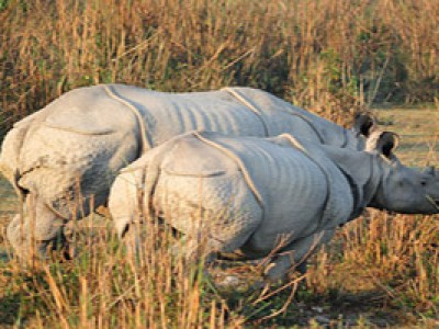 Explore Stunning Assam Tour Package With Yatra