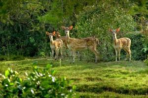 Wildlife Tour of Odisha  Package By Akbar Travel