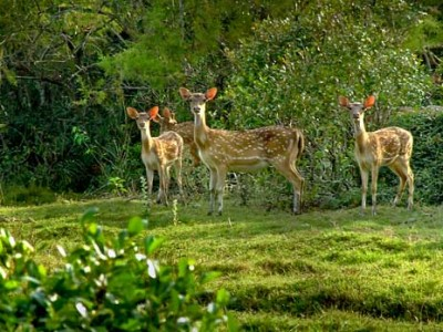 Wildlife Tour of Odisha  Package By Akbar Travel