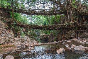 Explore Meghalaya & Assam Tour Package