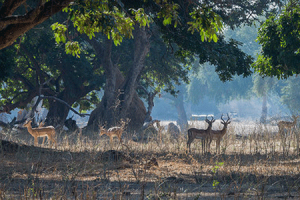 Manas Wildlife Tour Package By Thomas Cook