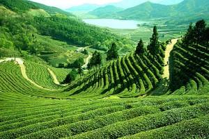 Enchanting Darjeeling