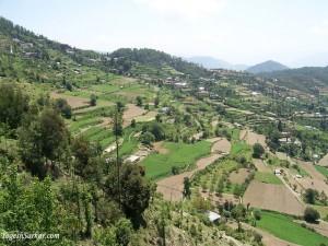 Chail Village View