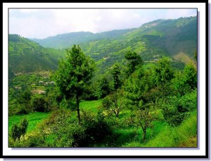 Green Hills of Shimla