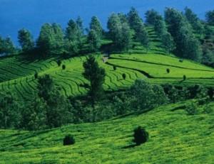 Munnar, Kerala hill stations