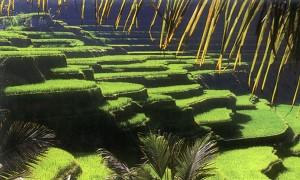 Ubud, Bali Ricefields