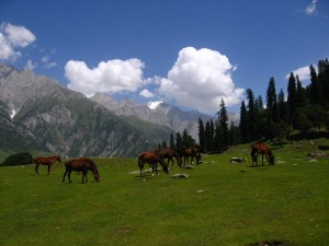 Sonmarg Pasture