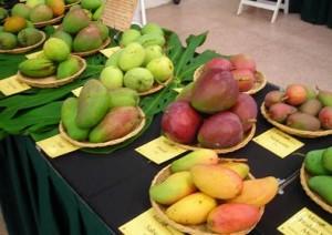 Mango Festival Sindhudurg
