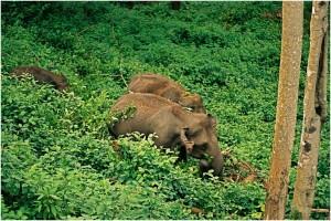 Munnar Wildlife