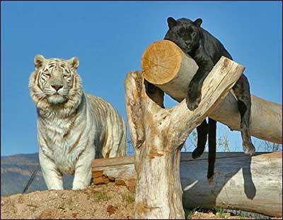 South Africa Wildlife