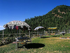 shilon resort shimla