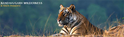 Infinity Resorts Wildlife Tour Packages Travel Offers