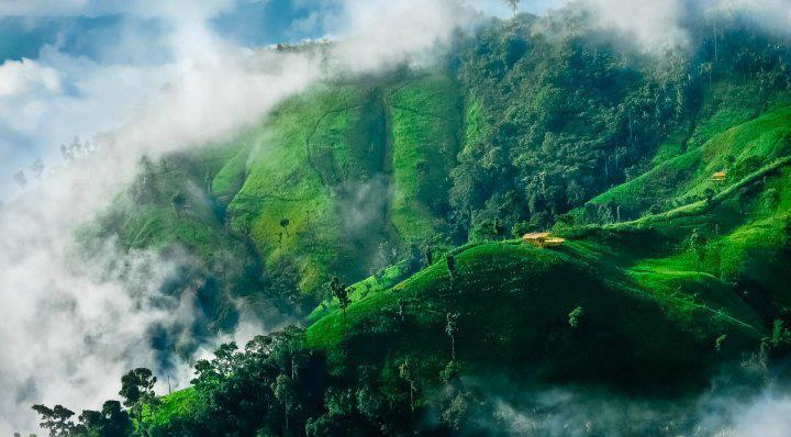 Nilgiri(blue mountain)
