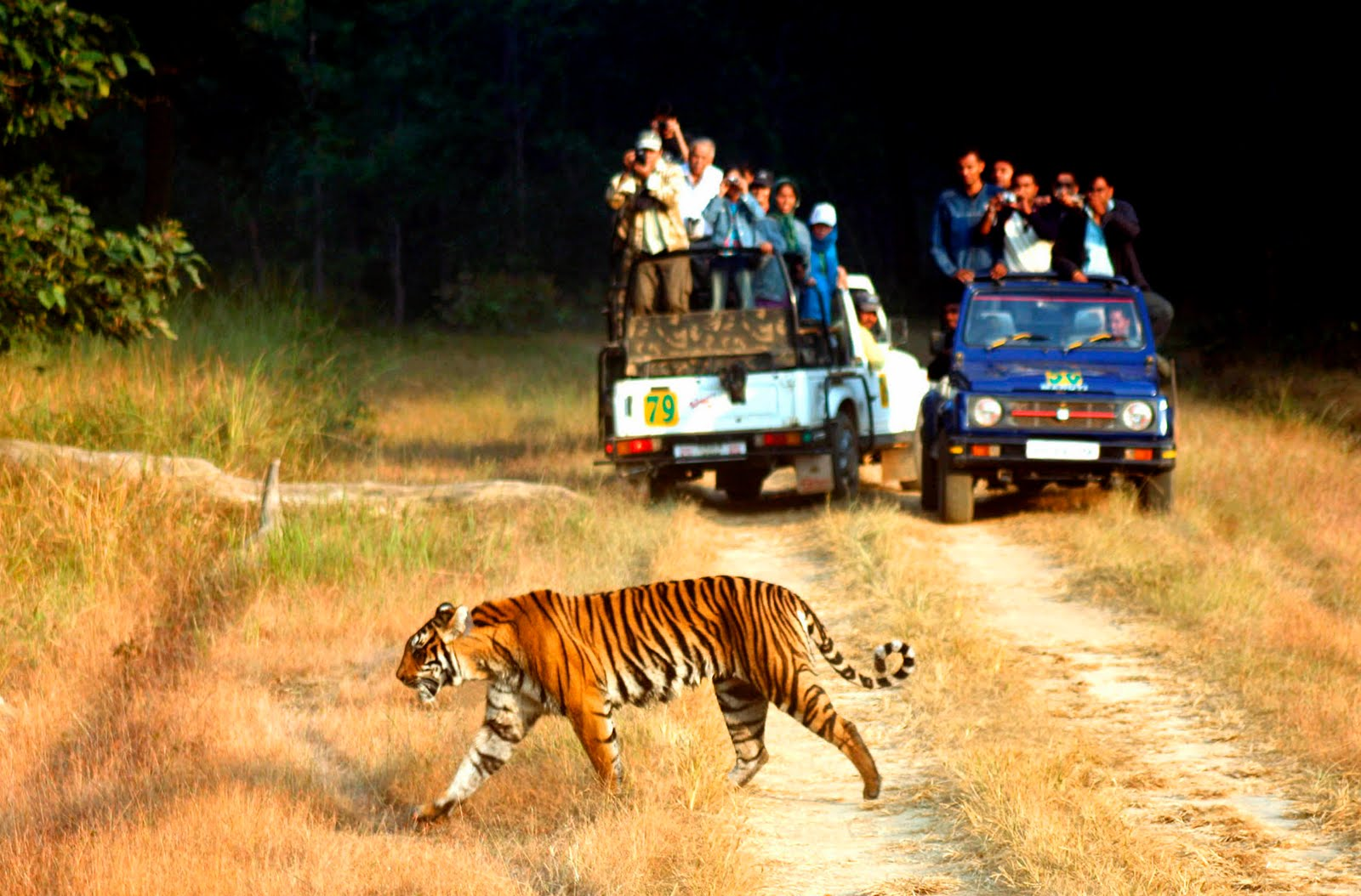 Corbett National Park 1