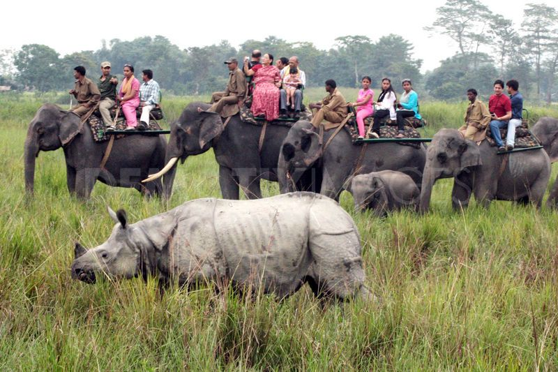 Kaziranga National Park in Assam