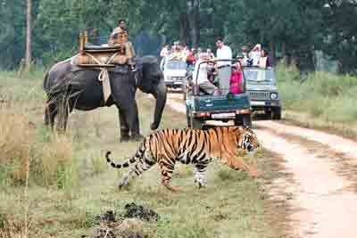 Kanha-tiger-elephant-safari