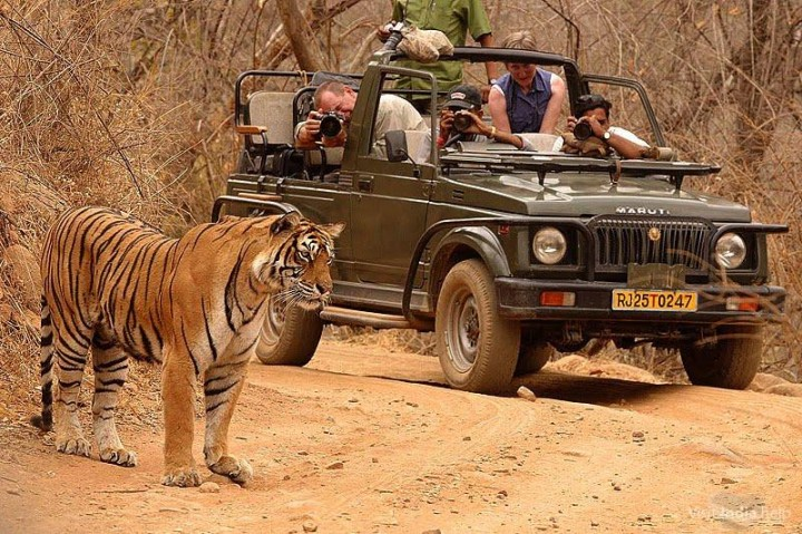 Tadoba-National-Park