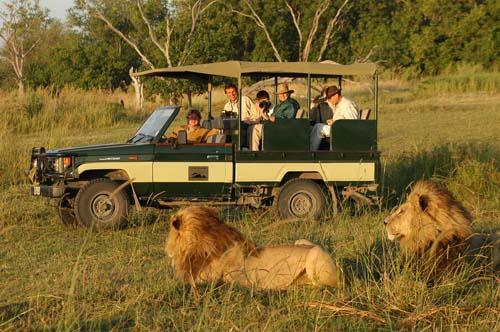Wildlife Safari Kenya