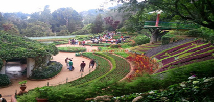 Botanical garden,Ooty