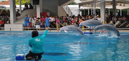 Dolphin Lagoon Show, Singapore