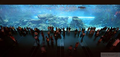 Dubai Mall's Aquarium