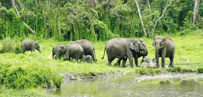 Jaldapara Wild Life Sanctuary