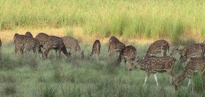Kanha National park1