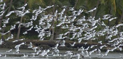 Kumarakom Birds Sanctuary