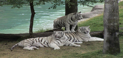 Nandan Zoological Park