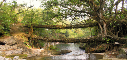 Single Decker Living Root Bridge