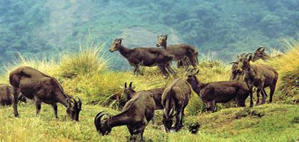 Rajamalai National Park