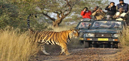 Ranthambore Jeep Safari