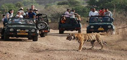 Safari in Ranthambore National Park
