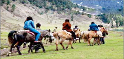 pahalgam pony riding
