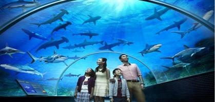 Marine Life Park singapore