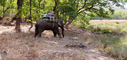 Elephant safari in Mudumalai National Park