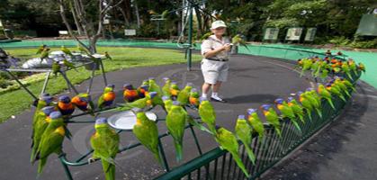 Currumbin Bird Sanctuary