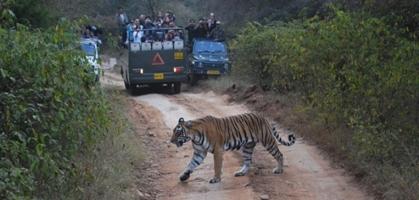 Jeep Safari Satpura National Park