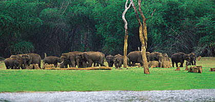 Muthunga Wild Life Sanctuary