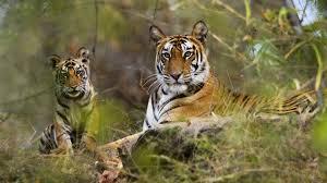 Satpura National Park1
