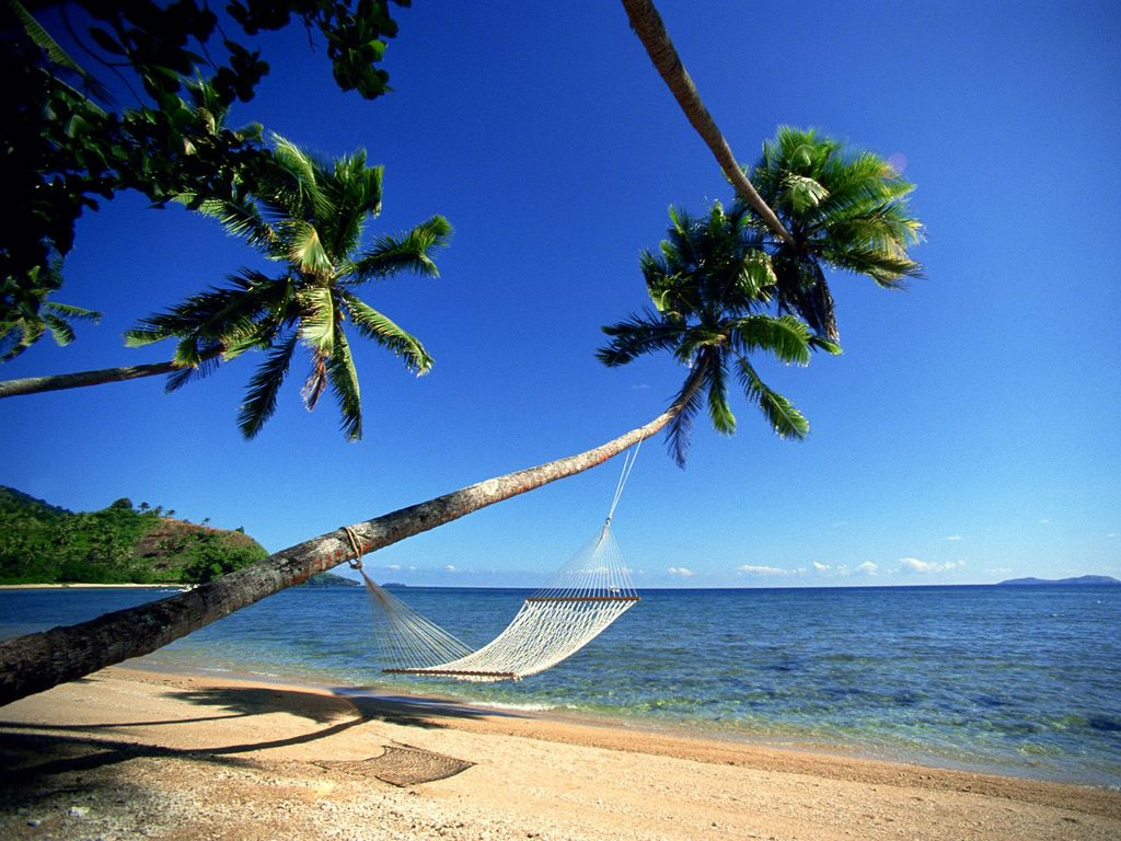 beach-bamboo-coconut-trees