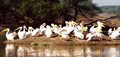 Bharatpur Birds Sanctuary