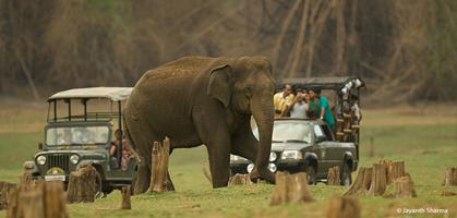 Nagarhole  Jeep  Safari