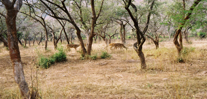 Sariska Wildlife Sanctuary