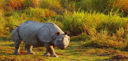 Dooars Wildlife Sanctuary