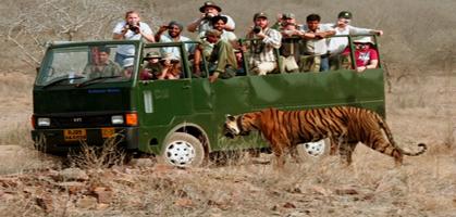 Open Canter Safari